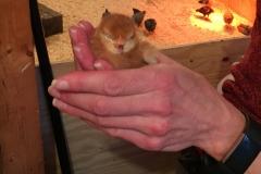 Little puff