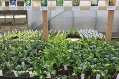 Sale plants