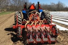 Carrot seeding