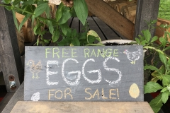 Free Range Eggs for Sale!